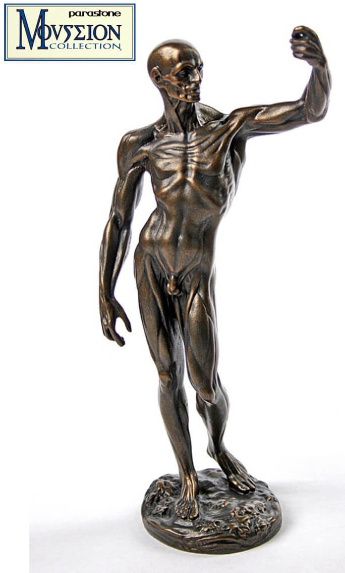 Houdon - Étude Anatomique