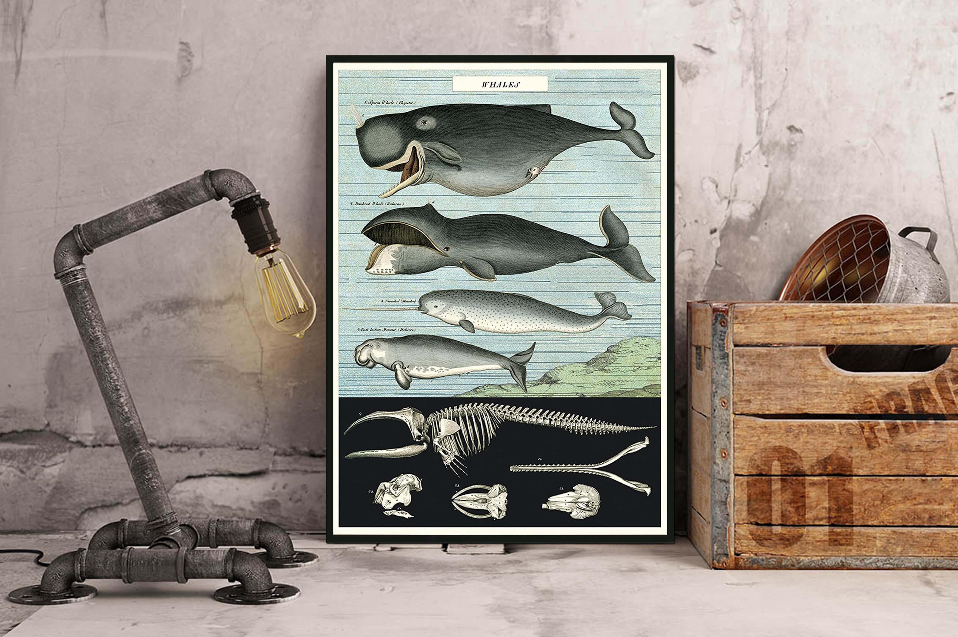 17 - Baleines