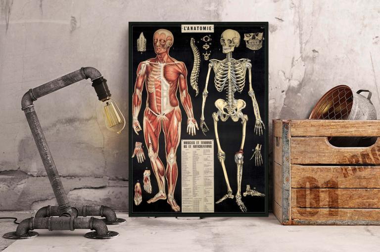1 - Anatomie