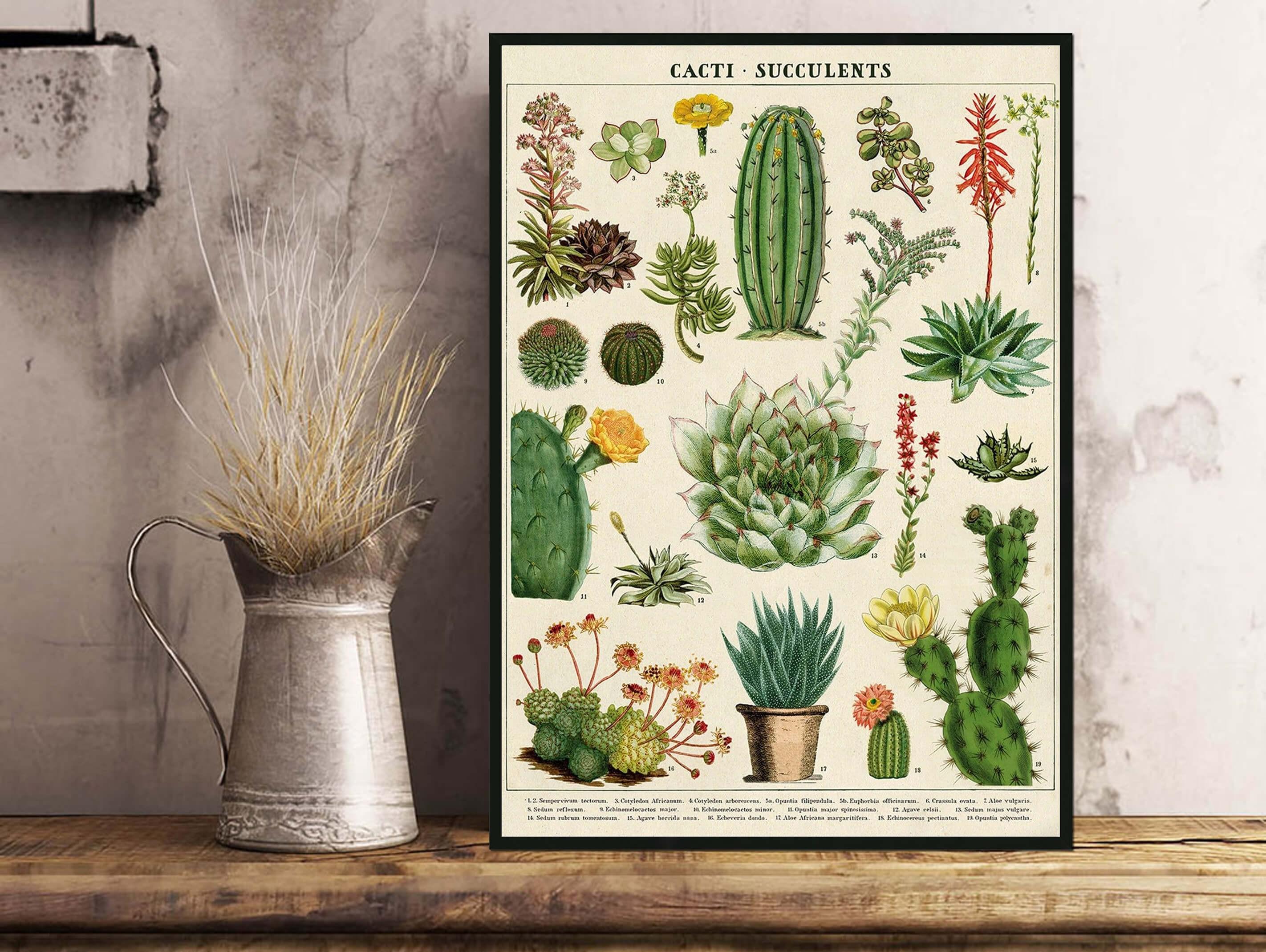 28 - Cactus & Plantes Grasses