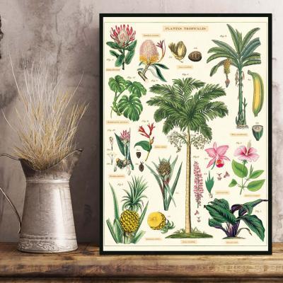 29 - Plantes Tropicales