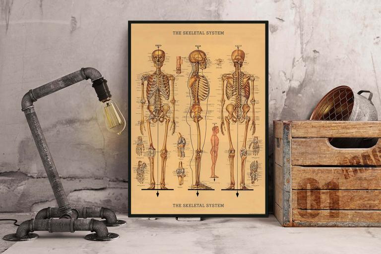 2 - Le Squelette